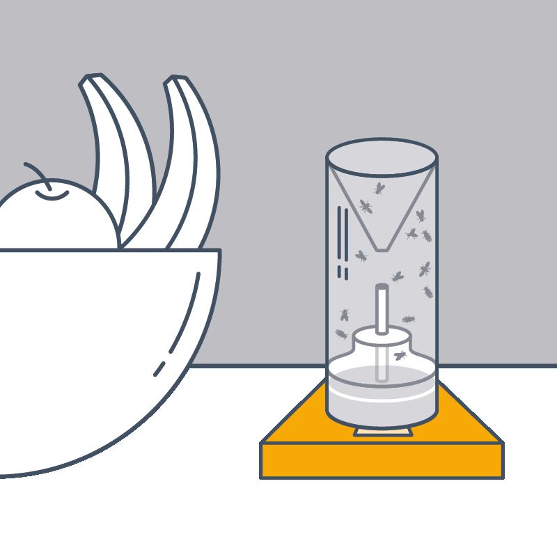 4. Pro Raum (bis max. 25 m2) einen Retter verwenden. Retter in unmittelbarer Nähe von Befallsorten, z. B. Fruchtschale, aufstellen.
