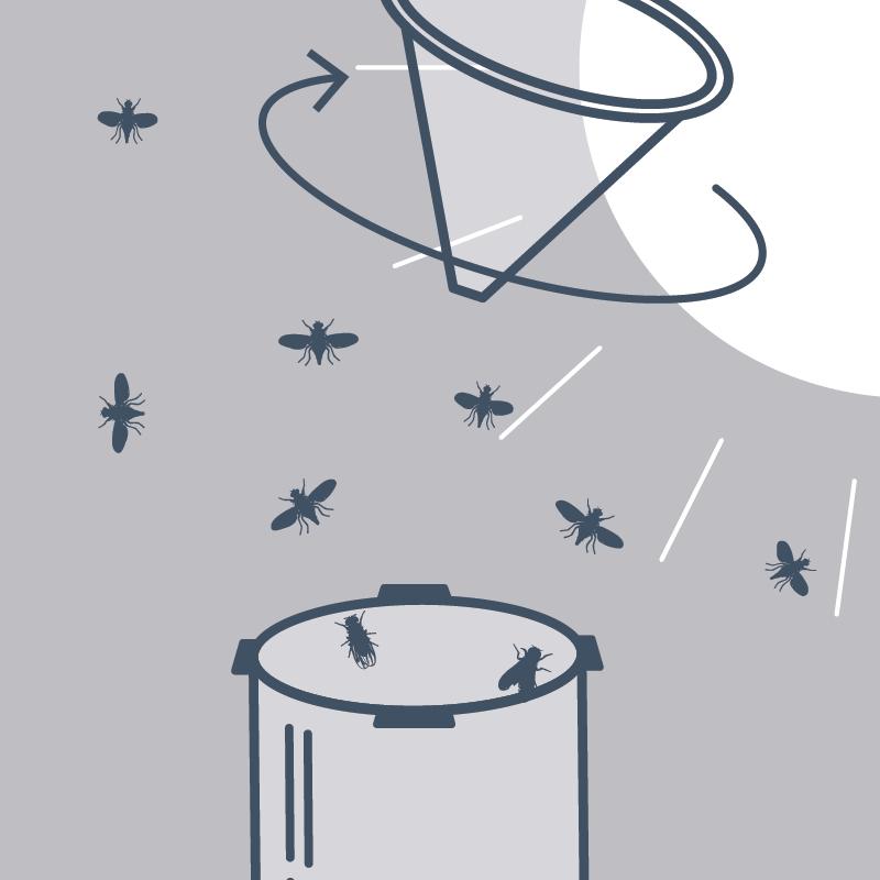 5. Täglich gefangene Fliegen in der Natur freilassen. Entweder indem man den Zylinder aus dem Sockel dreht und die Fruchtfliegen durch leichtes Schütteln freilässt, oder …