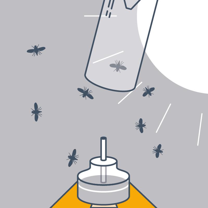 … indem man den Trichter abschraubt und die Fruchtfliegen ohne Schütteln freilässt.