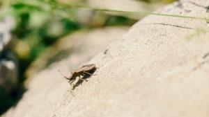 Käfer Nahaufnahme