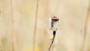 Motte Nahaufnahme in Natur