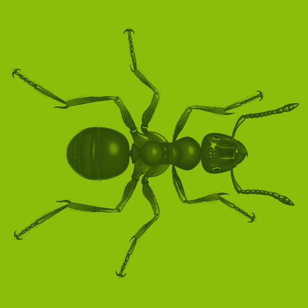 Ant Illustration Scientific