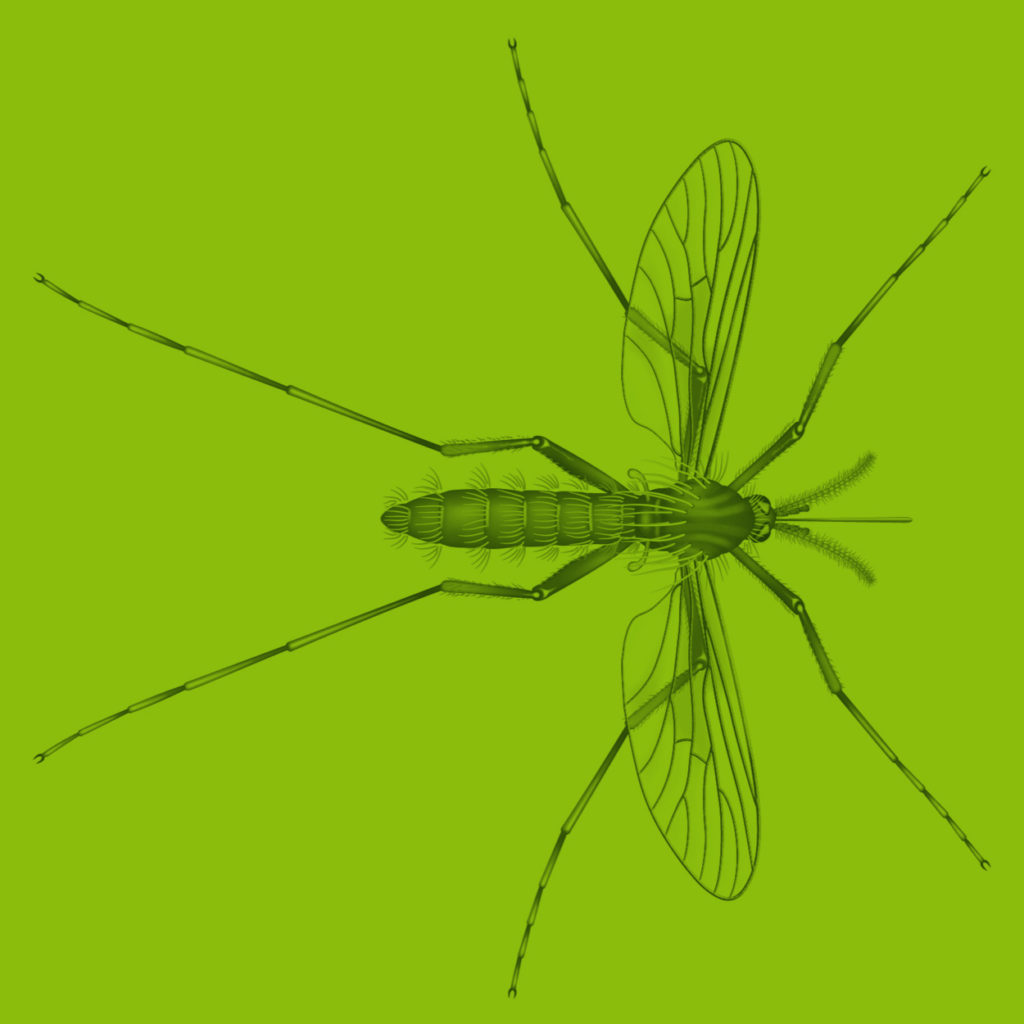 Plug Mosquito Illustration Scientific